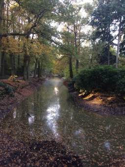 Water en herfst